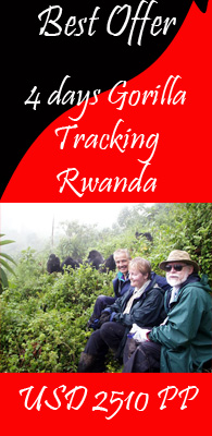 Gorilla Tracking Rwanda 4 days speicial best offers