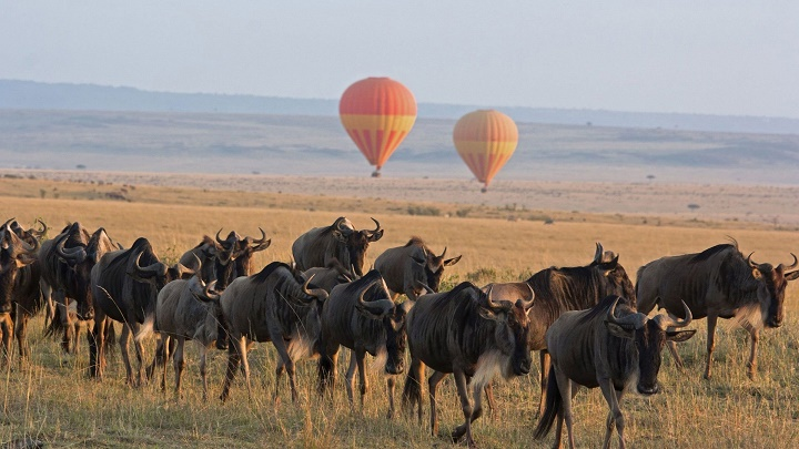 Wildebeest migration Masai Mara And Serengeti National Parks, Safaris, Attractions, Activities, Lodges