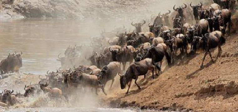 WILDEBEEST MIGRATION MASAI MARA SERENGETI, WHEN TO VISIT, WHERE TO STAY, MASAI MARA ATTRACTIONS