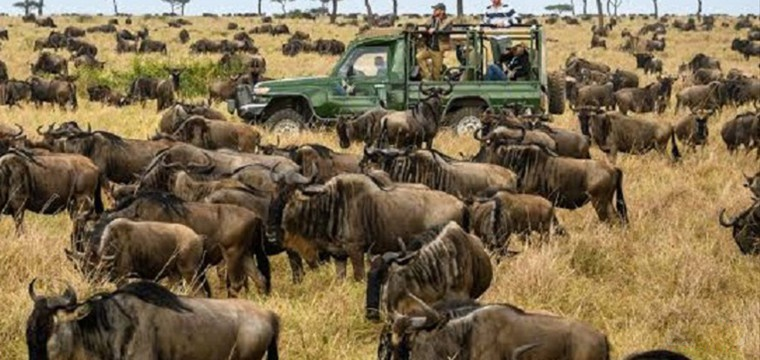 WILDEBEEST MIGRATION MASAI MARA SERENGETI, WHEN TO VISIT, WHAT TO SEE, BEST TIME